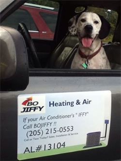 Bojiffy the dog for ac repair, ac install, heat pump repair, heat pump install